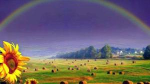 a-rainbow_and_flower-802407