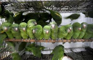 parrots-cage_1122020i