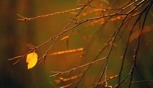last-leaf1
